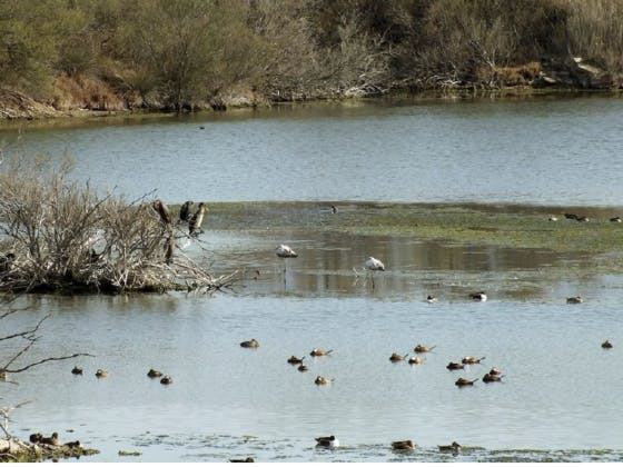 La flora y fauna de la Desembocadura del río Guadalhorce
