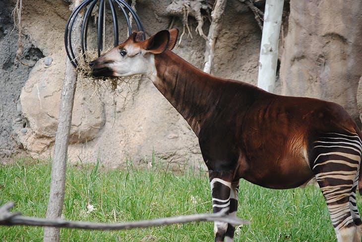 4 animales raros que igual todavía no conoces