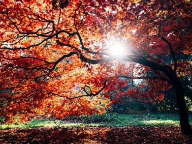 cuando-empieza-el-otoño