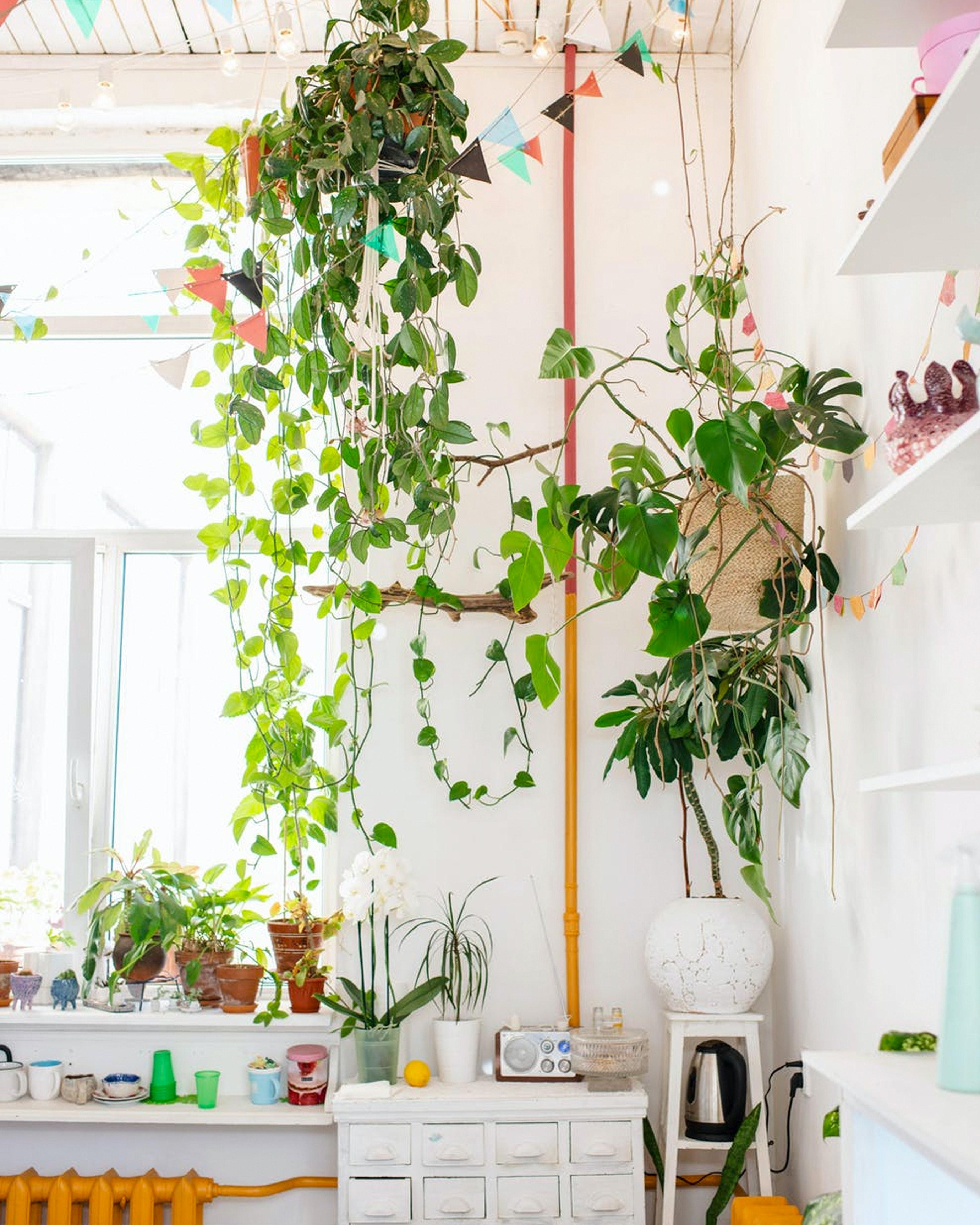 decorar-con-plantas-04