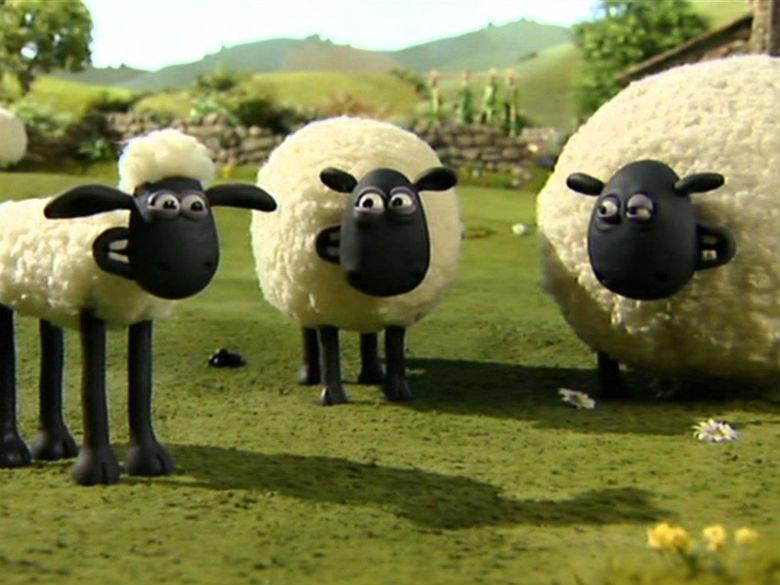 ovelha choné