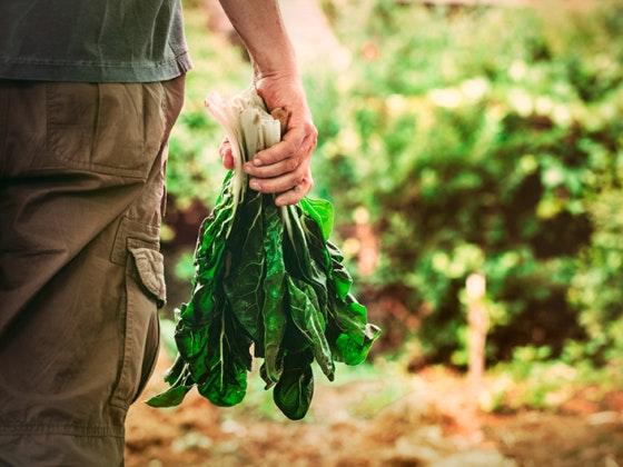 Agrikolage: Tudo para bricolage e agricultura