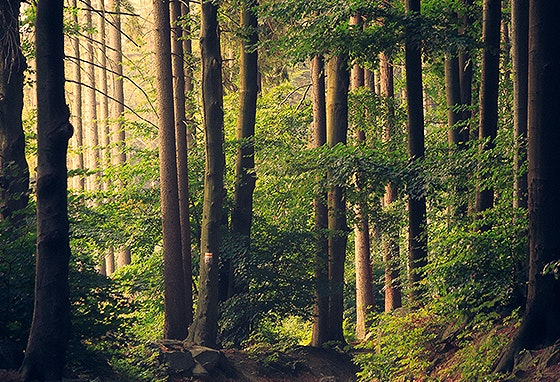 Incêndios: saiba como ajudar a proteger a floresta