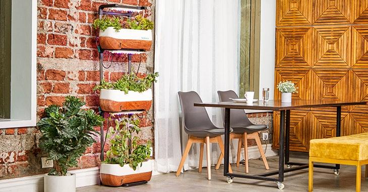 VariosSC-decoração-de-jardim-como-aproveitar-espaços-ar-livre