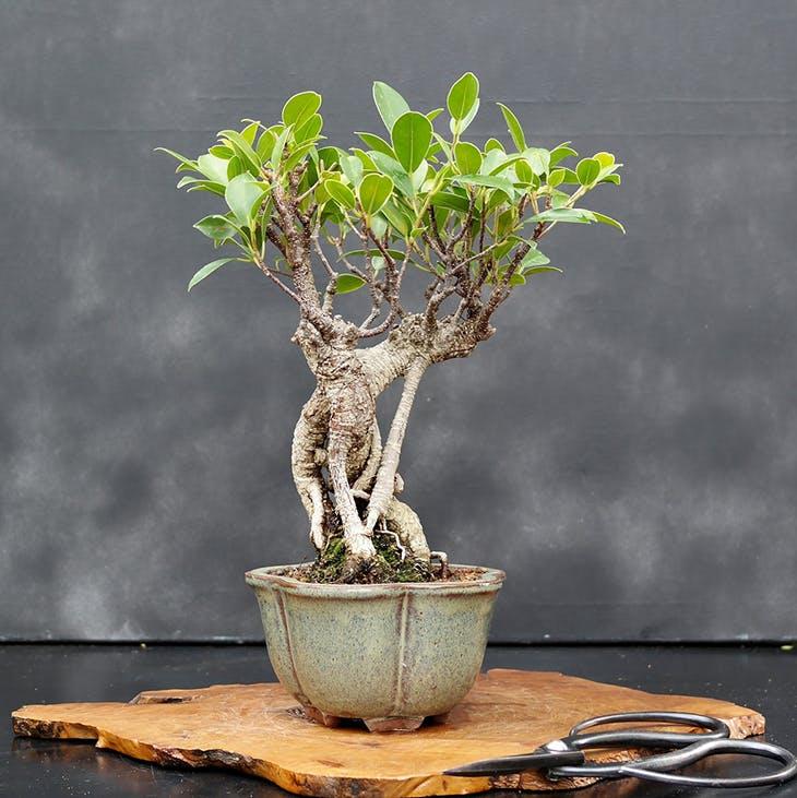 4 tipos de plantas de interior que no pueden faltar en tu salón