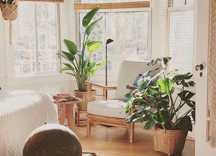 plantas-de-interior-decoración