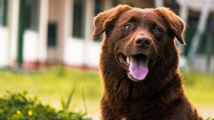 4 curiosidades sobre los perros que puede que todavía no conozcas