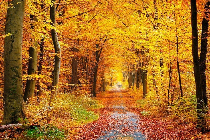 cuando empieza el otoño