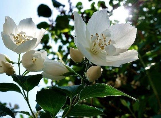 olores primavera