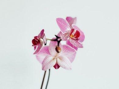 orquídeas cuidados