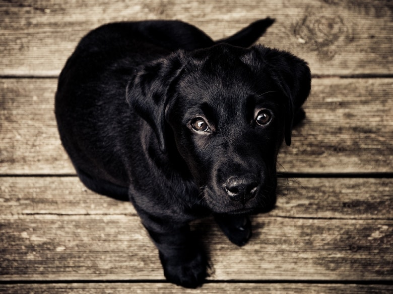 wood-animal-dog-pet