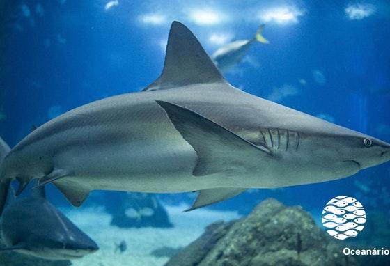 Já visitou o Oceanário este verão? Venha daí!