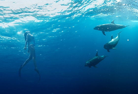 Dia Mundial dos Oceanos
